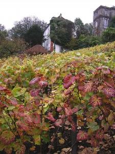 Vignobles de Montmartre