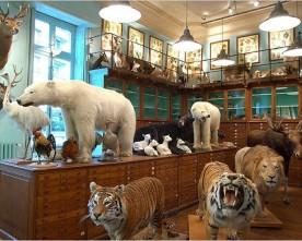 Deyrolle, winkel met bijzondere collectie