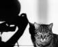 De kat en haar fotografen