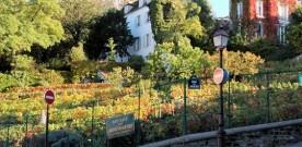 Wijnoogstfeest op Montmartre : la Fête des Vendanges